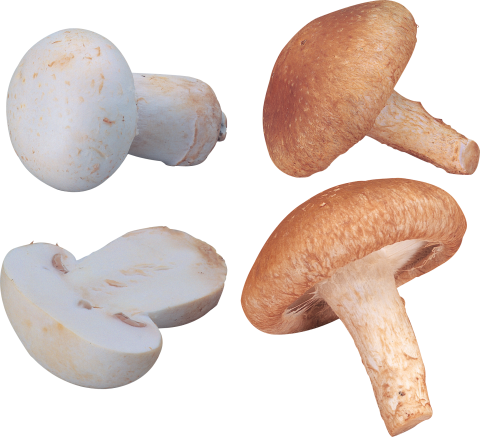 orange and white Mushrooms PNG