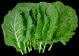 Organic Collard Greens PNG