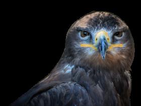 Owl Bird PNG