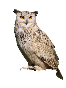 Owl Sitting PNG