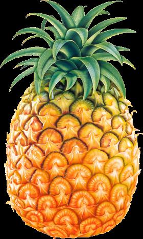 Pinapple Drawing PNG