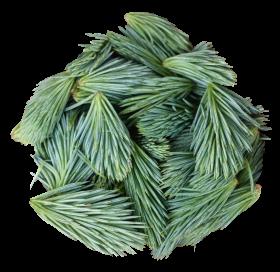 Pine Leaves PNG