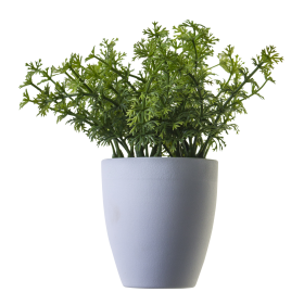 Plant PNG