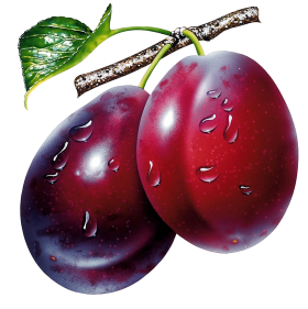 Plum PNG