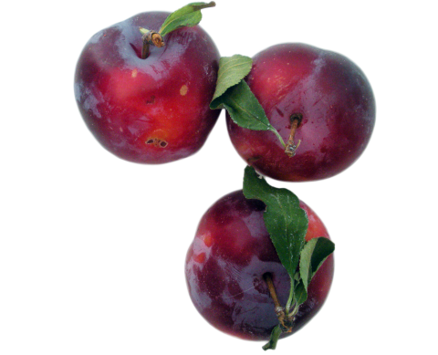 Plums PNG