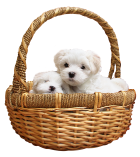 Puppy PNG