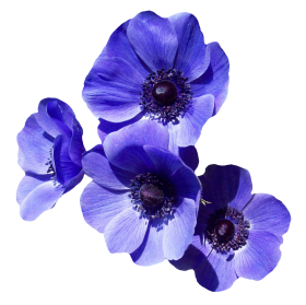 Purple Flower PNG