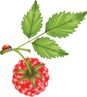 Rasberry drawing PNG