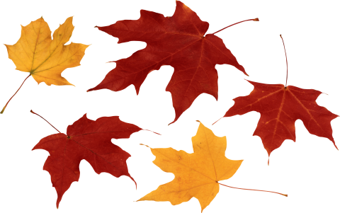 Red Autumn Leaf PNG