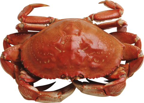 Red Crab Standing PNG