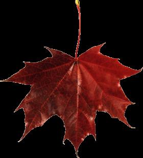 Red Leaf PNG