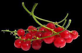 Redcurrant PNG