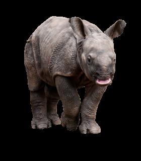 Retarded Rhino PNG