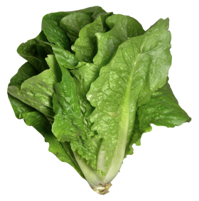 Romaine Lettuce PNG