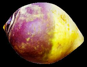 Rutabaga PNG
