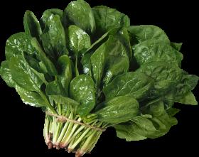 Salad PNG