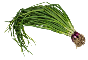 Scallion Spring Onion PNG
