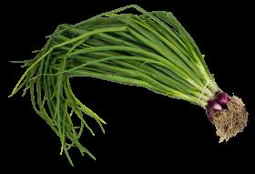 Scallion Spring Onion PNG