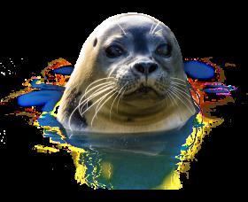 Seal PNG