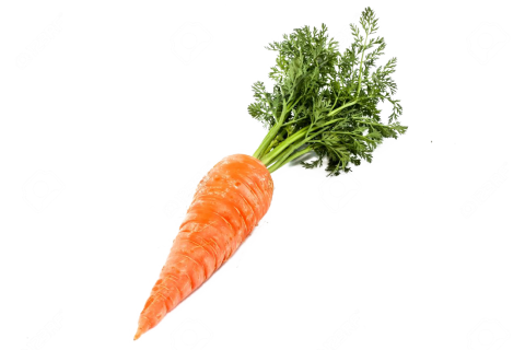 Single Carrot PNG