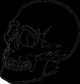 Skulls PNG
