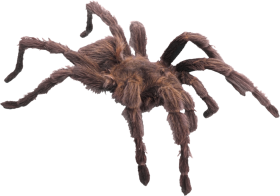 Spider PNG