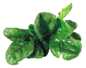 Spinach PNG