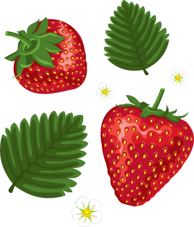 Strawberrys PNG