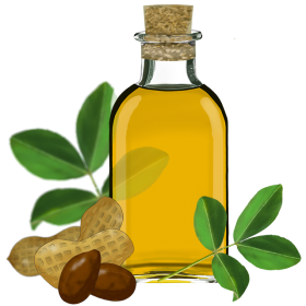 Sunflower Oil Clipart with Nuts PNG