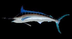 Swordfish PNG