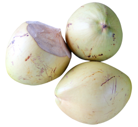 Top view of Coconut PNG