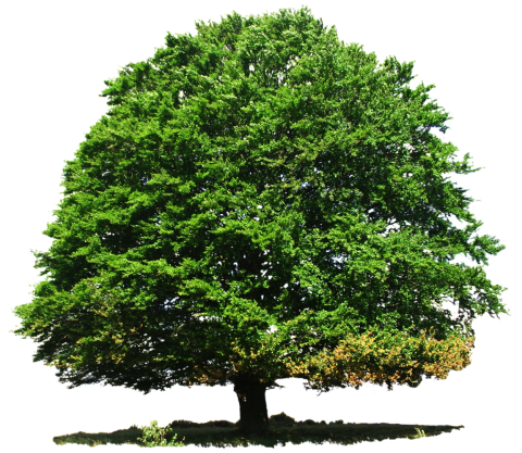 Large Greenery Tree PNG