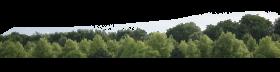 Tree Skyline PNG