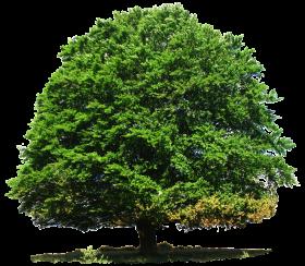 Big Landscape Tree PNG