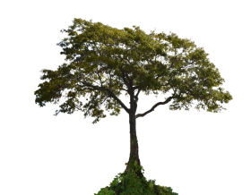 Tree with Plants PNG