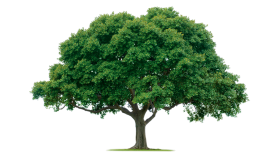 Large Nature Tree PNG