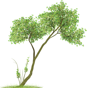 Leafy Tree with Grass PNG