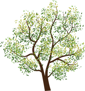 Leafy Tree PNG