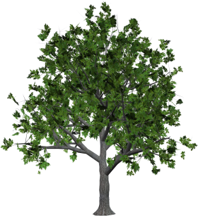 Wood Tree with Leaves PNG
