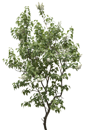 Garden Leaf Tree PNG