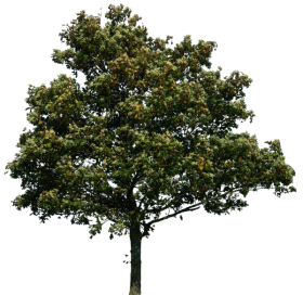 Nature Forest Tree PNG