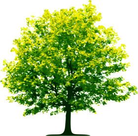 Tall Green Tree PNG