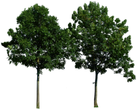 Large Wood Tree PNG