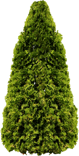 Fir Garden Tree PNG