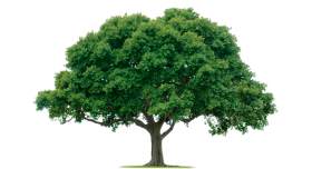 Big Outdoor Tree PNG