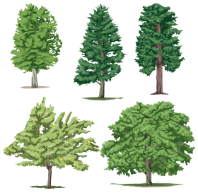 Leafy Tree Collection PNG