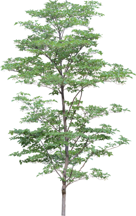 Natural Big Tree  PNG