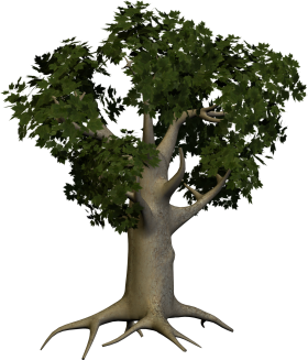 Oak Wood Tree PNG