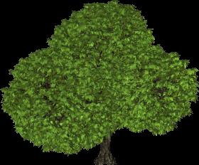 Big Leafy Tree PNG