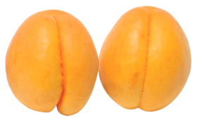 Two Apricots PNG